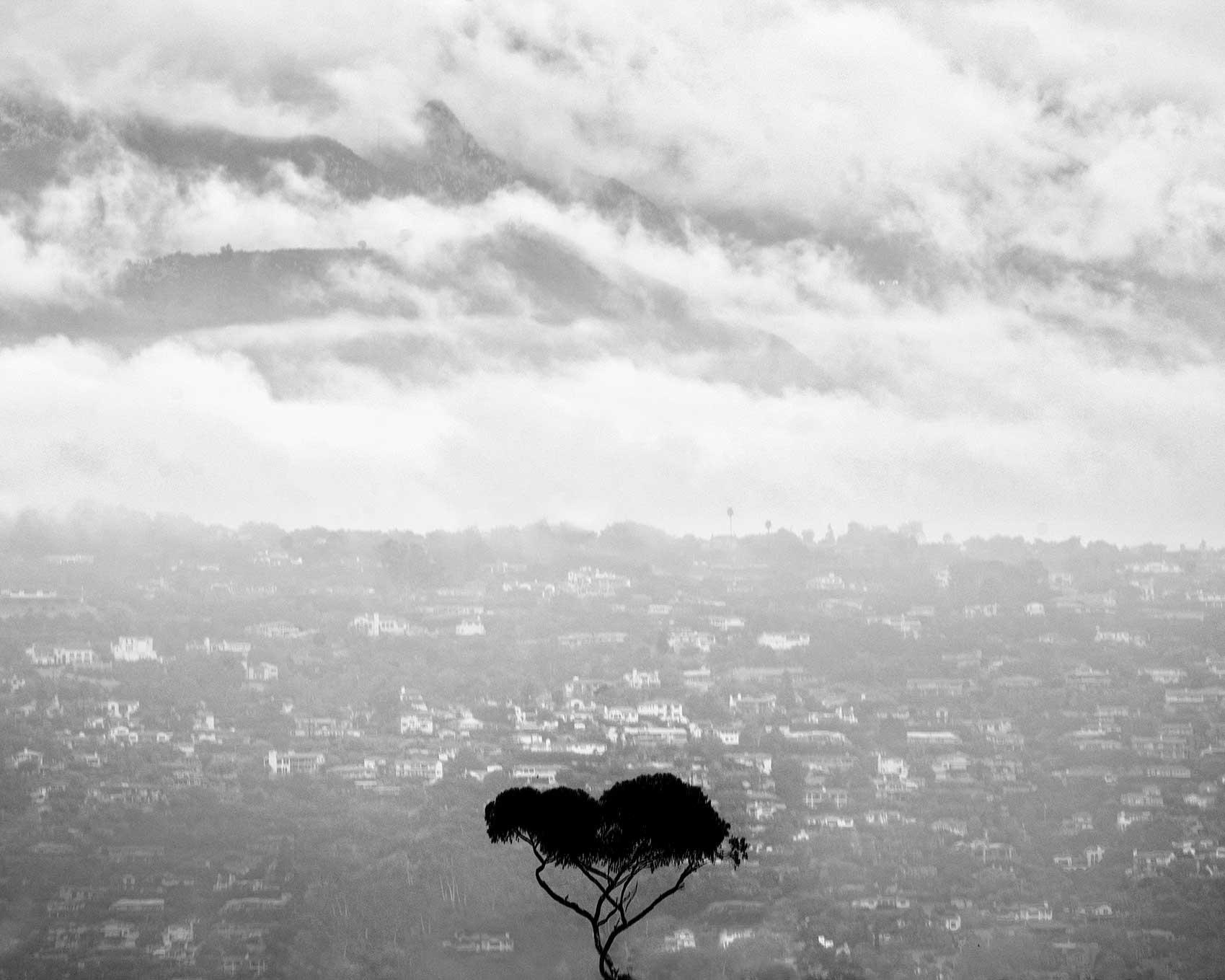 © Peter Jamus